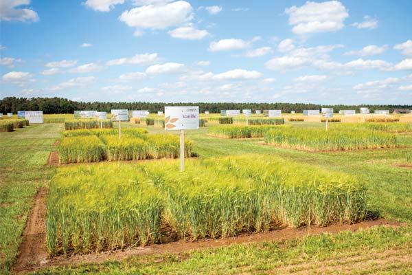 Barley Breeding
