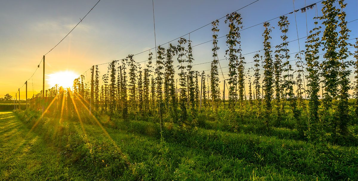 Brewers Association Funded Research Grants