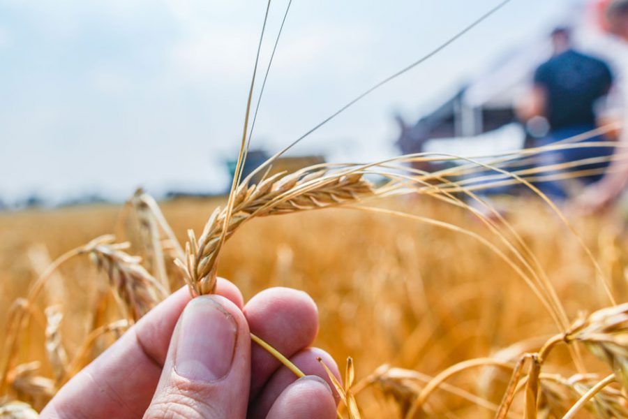 The Growing Importance of Malt Flavor and Aroma