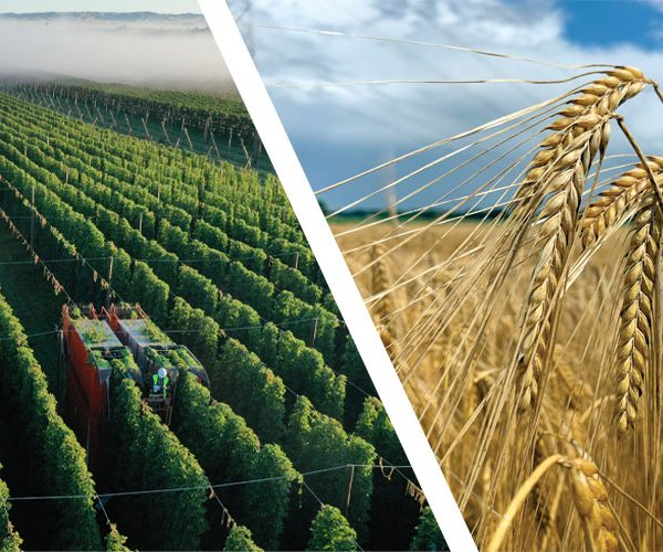 Harvest Reports 2020