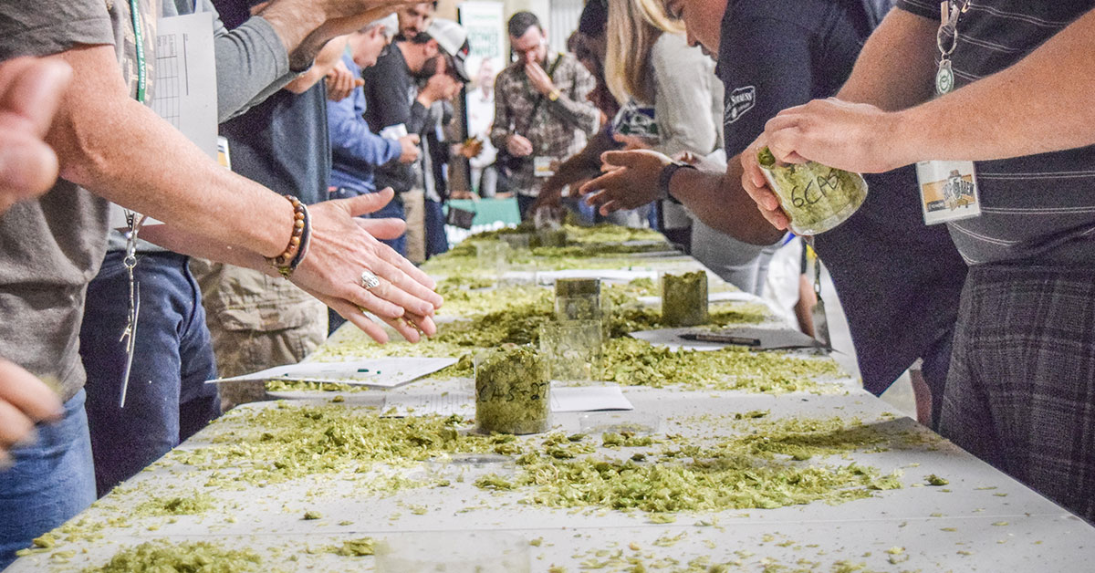 Hop Selection Update 2021