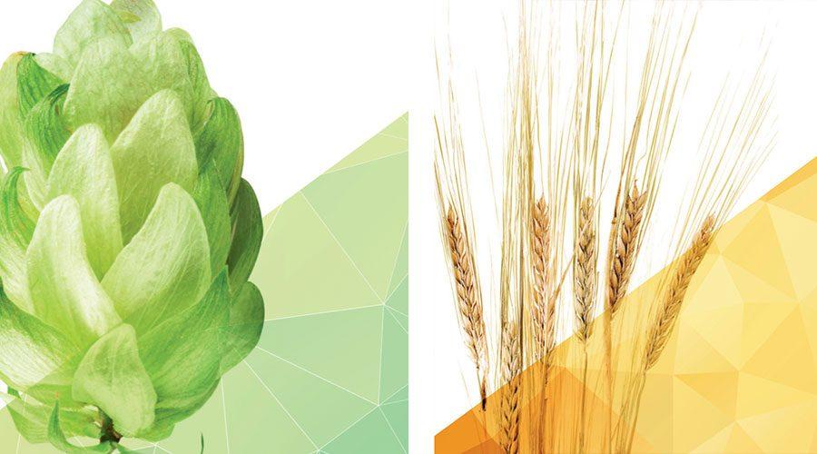 tnb15 world hops barley harvest