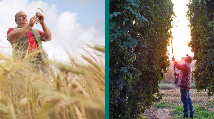 tnbnd14 hops barley harvest